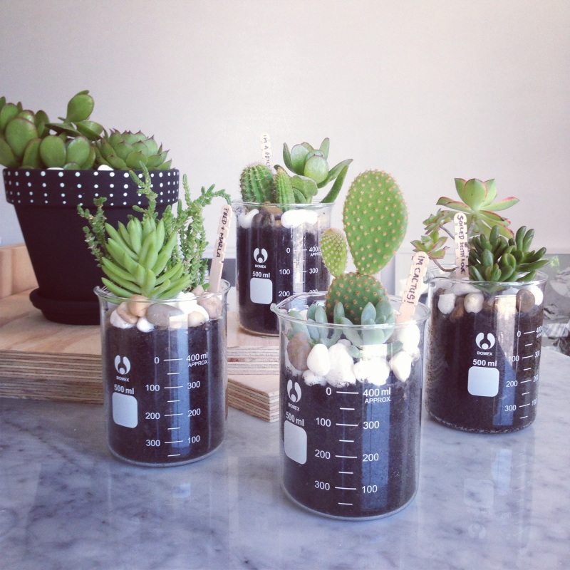 The Minimalist Store x Bein' Frank mini succulent beakers
