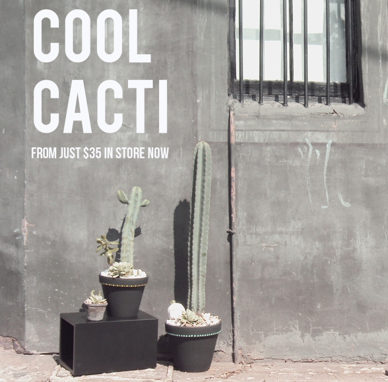 The Minimalist Home x Cool Cacti